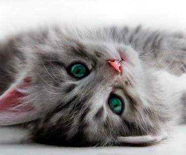 Jak rozpoznać wiek kota?