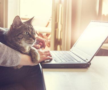 Jak rozpoznać, że kot jest chory?
