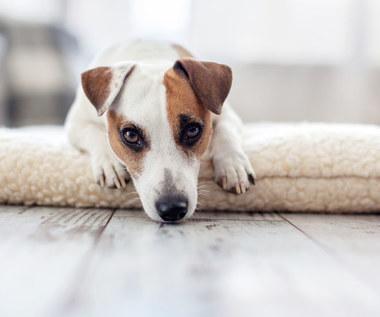 Jak rozpoznać, że pies jest chory? Typowe i nietypowe objawy