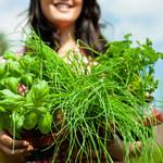Jak rozsądnie stosować zioła?