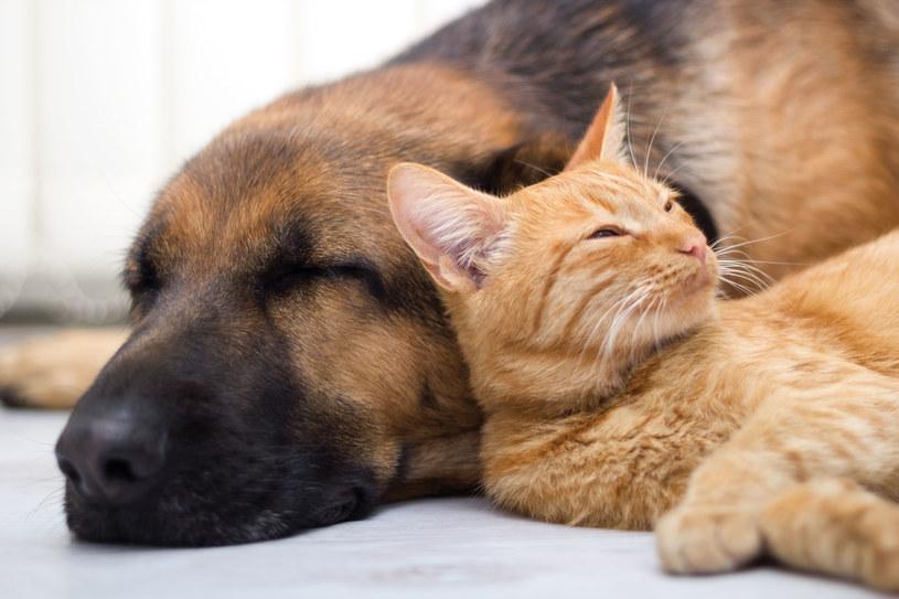 """Jak się okazało, koty i psy """"śnią"""" zupełnie inaczej /123RF/PICSEL"""