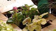 Jak skonstruować żywy obraz z roślin?
