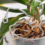 Jak skutecznie odmłodzić rośliny doniczkowe?
