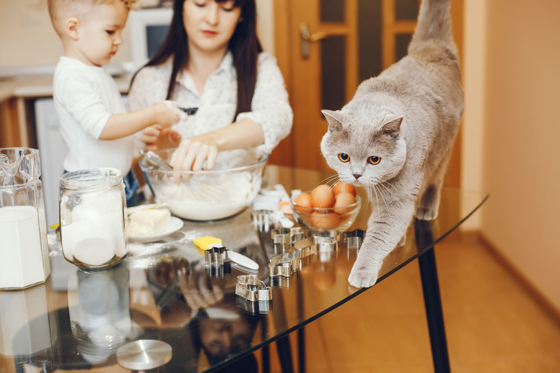"""Jak skutecznie powiedzieć kotu """"nie""""? Najlepiej w jego języku! /123RF/PICSEL"""