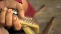 Jak smakuje wąż?