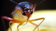 Jak sobie pomóc, gdy ukąsi jadowity owad