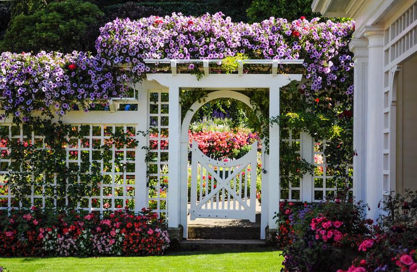 Jak stworzyć wyjątkowy ogród? /©123RF/PICSEL