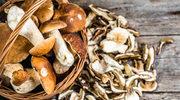 Jak suszyć i marynować grzyby?