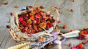 Jak suszyć kwiaty - porady