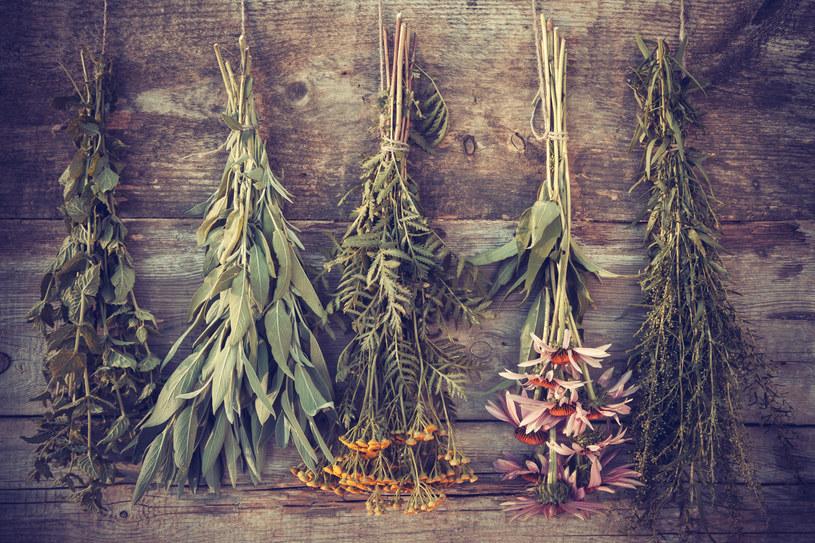 Jak suszyć zioła w sierpniu? /123RF/PICSEL