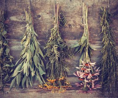 Jak suszyć zioła w sierpniu?