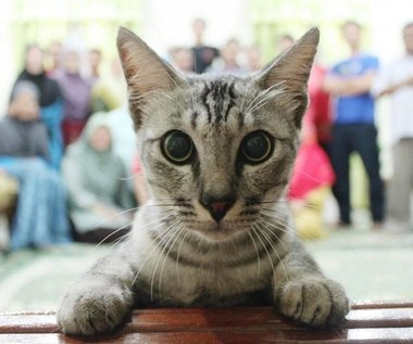 Jak to jest być kotem?