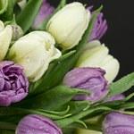 Jak trzymać tulipany w wazonie