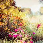 Jak uchronić rośliny przed jesiennymi przymrozkami?