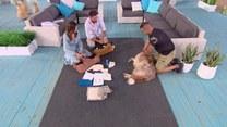 Jak udzielić psu pierwszej pomocy?