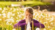 Jak uniknąć ataku pyłków i grzybów