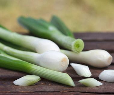 Jak uprawiać zieloną cebulkę w domu?