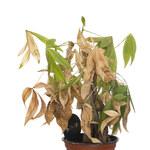 Jak uratować przesuszone rośliny?
