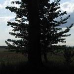 Jak usunąć drzewo lub krzew z działki?