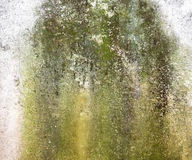 Jak usunąć glony z elewacji, tarasów i donic? Skuteczne sposoby