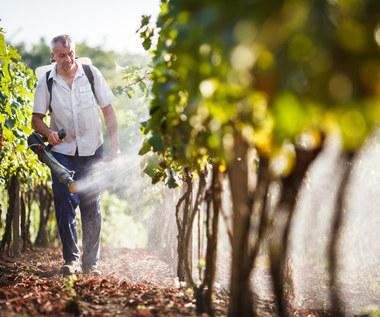 Jak usunąć pestycydy z owoców i warzyw?