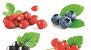 Jak usunąć plamy z borówek i jagód?