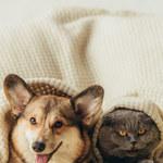 Jak usunąć sierść psa i kota z domu? Skuteczne sposoby