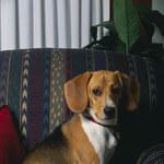 Jak usunąć zapach psa z domu?