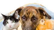 Jak utrzymać czysty dom, mając zwierzęta domowe