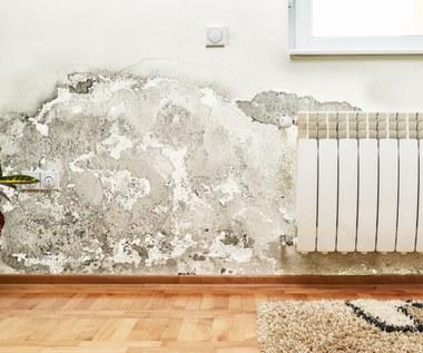 Jak walczyć z wilgocią w domu?