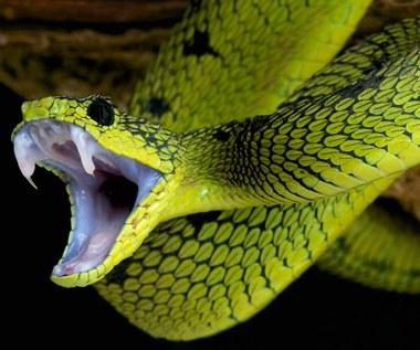 Jak węże straciły kończyny?