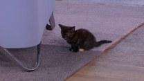 Jak wychować małe kotki?