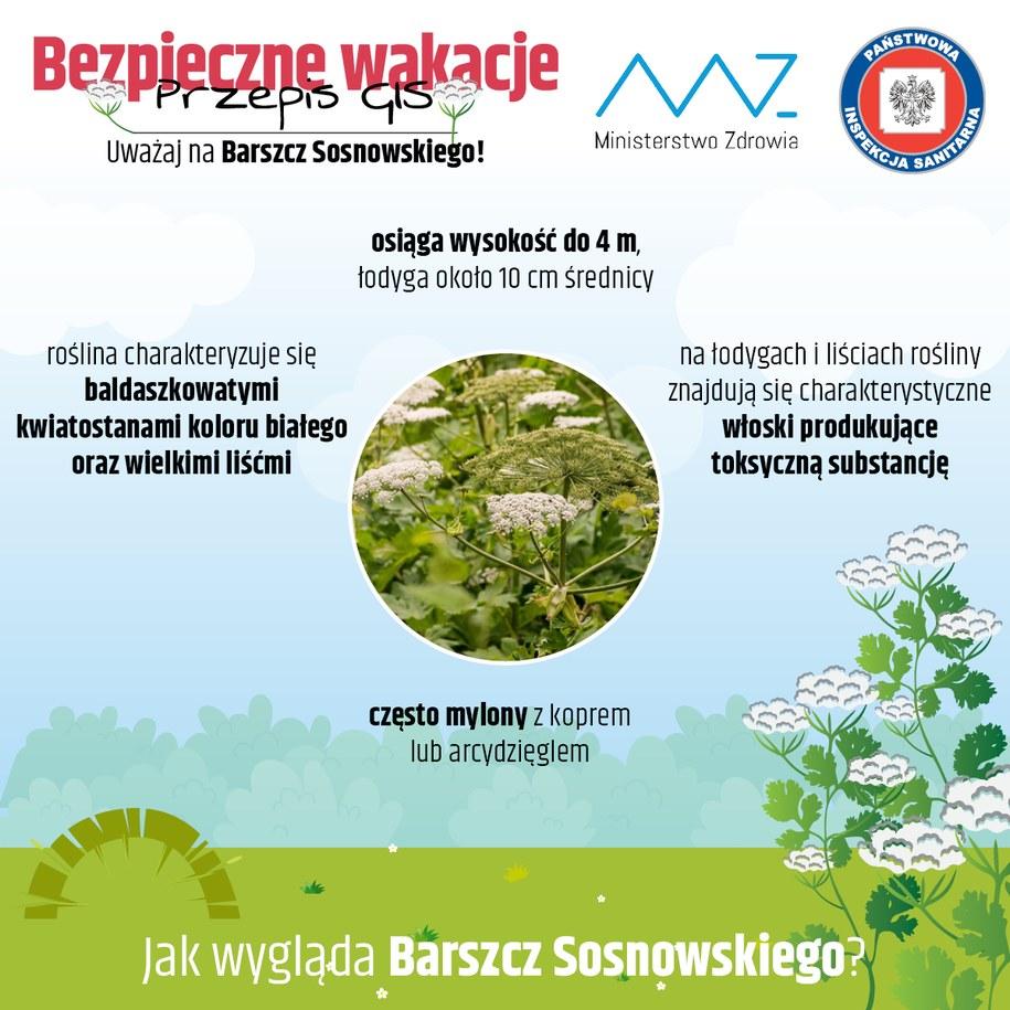 Jak wygląda Barszcz Sosnowskiego? /gis.gov.pl /