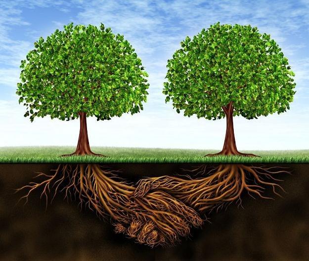 Jak wygląda współpraca biznesu z fundacjami? /