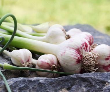 Jak wykorzystać czosnek i drożdże w ogrodzie?