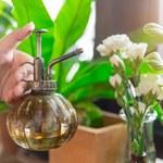 Jak wykorzystać herbatę w kuchni i w ogrodzie?