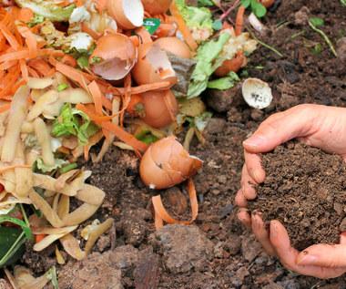 Jak wykorzystać obierki z warzyw?