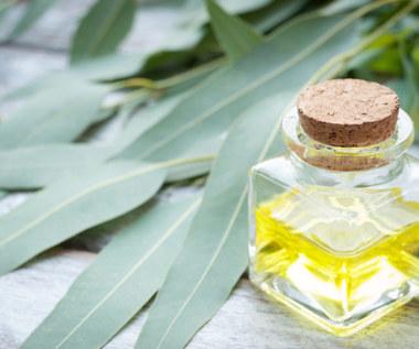Jak wykorzystać olejek eukaliptusowy?