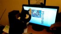 Jak wzbudzić w kocie zamiłowanie do komputera?