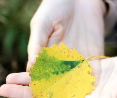 Jak wzmocnić odporność na jesień?
