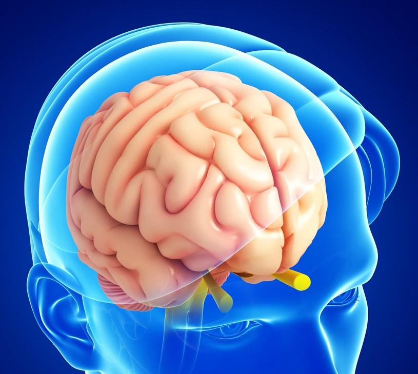 Jak wzmocnić układ nerwowy? /©123RF/PICSEL