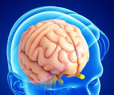 Jak wzmocnić układ nerwowy?