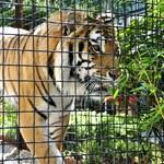Jak z upałami radzą sobie mieszkańcy warszawskiego zoo?