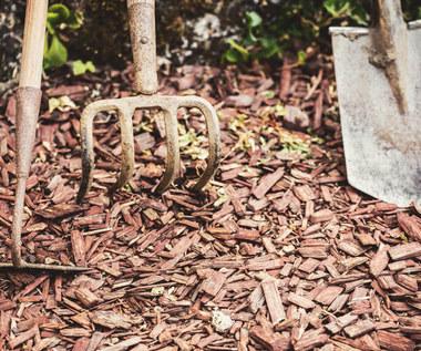 Jak zabezpieczać rośliny na zimę?