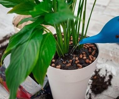 Jak zabezpieczyć rośliny przed urlopem?