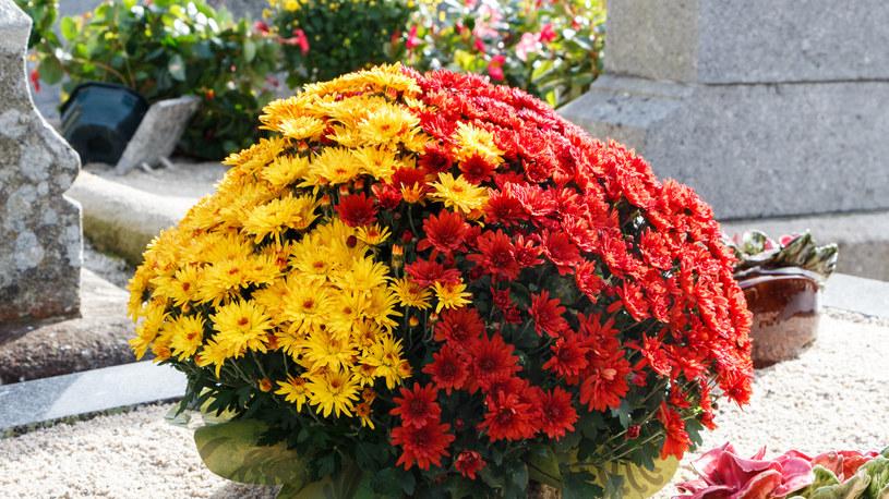 Jak zadbać o kwiaty na cmentarz przed dniem Wszystkich Świętych? /123RF/PICSEL