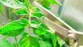 Jak zadbać o sadzonki ziół w domu?
