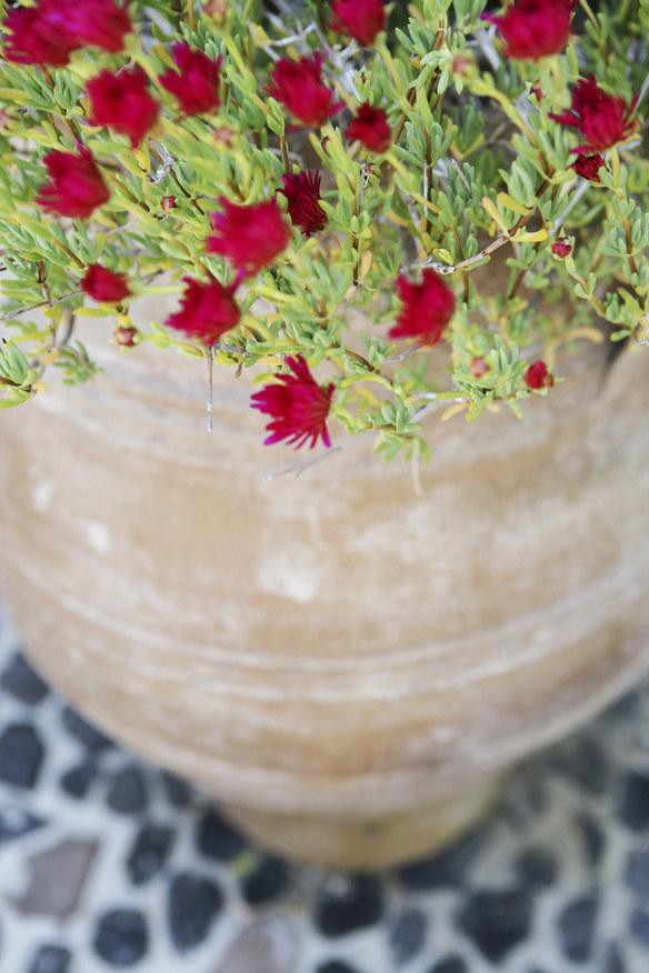 Jak zajmować się roślinami by nie uschły /© Photogenica