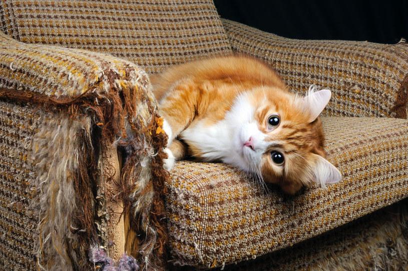 Jak zapanować nad niesfornym kotem? /©123RF/PICSEL