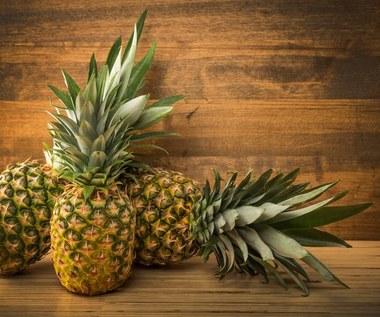 Jak zasadzić ananasa?